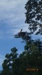 Pampas - cet oiseau est immense (son nom est le Jabirú)