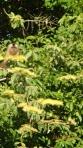Pampas - un des singes de la place se sont les petits du singe hurleur qui lui est tout noir