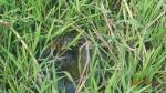 Pampas - et le voici cette anaconda