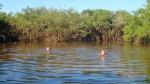 Pampas - C'est l'heure du bain avec les dauphins, les piranhas et les alligators (un dauphin passe juste à côté de Denis!)