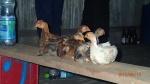 Pampas - Les fameux poulets (ou cailles) là où on allait au bar pour admirer le coucher de soleil