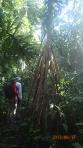 Jungle - quel arbre!