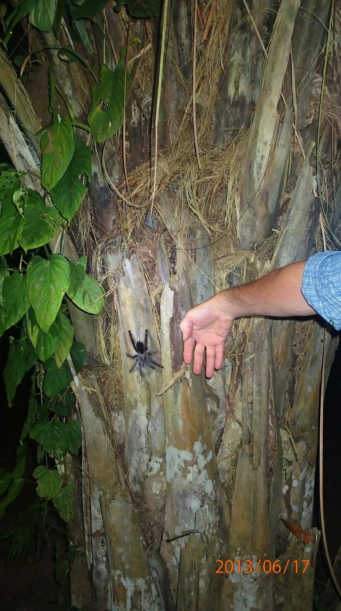 Jungle - De nuit...maintenant je sais où est son habitat donc ça me fait même plus peur...c'était tout simplement fascinant!