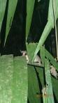Jungle - De nuit...je suis bien caché là!