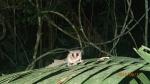 Jungle - ... Coucou! (Trop mignonne) NB: On ne sait plus son nom, si un de vous le trouver nous le faire parvenir.