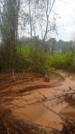 Jungle - Différent paysage durant notre marche voir les perroquets