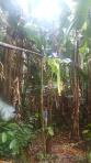 Jungle - C'est géant hein!