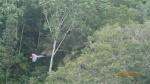 Jungle - ...puis en vol. C'est beau?