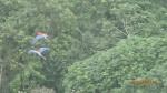 Jungle - et une en paire (notre caméra n'est pas géniale pour les prises de loin...dommage)