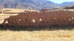 Sucre Trek - exemple de construction d'un enclos!