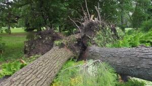 Ces 2 arbres n'auraient pas pu mieux tombés façon de parler mais quand même vrai! On aurait pu avoir beaucoup plus pire...