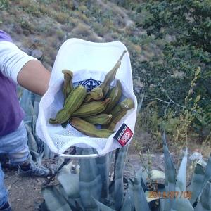 Arequipa - Tour au Cañon del Rio Colca: L'espèce de fruit tropical (dont je ne me souviens plus du nom...)