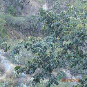Arequipa - Tour au Cañon del Rio Colca: ...qui pousse dans cette arbre...