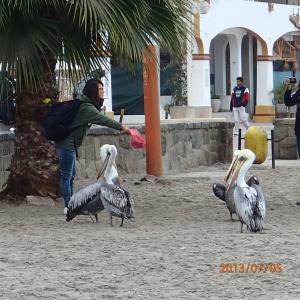Paracas - Salut la gang...on s'en va prendre notre dernier autobus pour Lima!