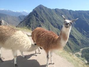 Cusco - Matchu Picchu: Allo! :-)