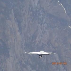 Arequipa - Tour vers le Cañon del Rio Colca: se sera le plus près qu'on verra...le voyez-vous c'est un condor?