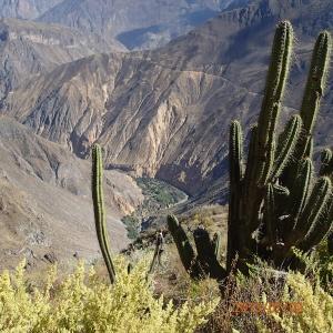 Arequipa - Tour au Cañon del Rio Colca: c'est quand même quelque chose...on descendera 1000m, on en remontera au moins la moitié puis en redescendra encore...