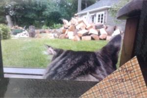 Tiger qui supervise les travaux